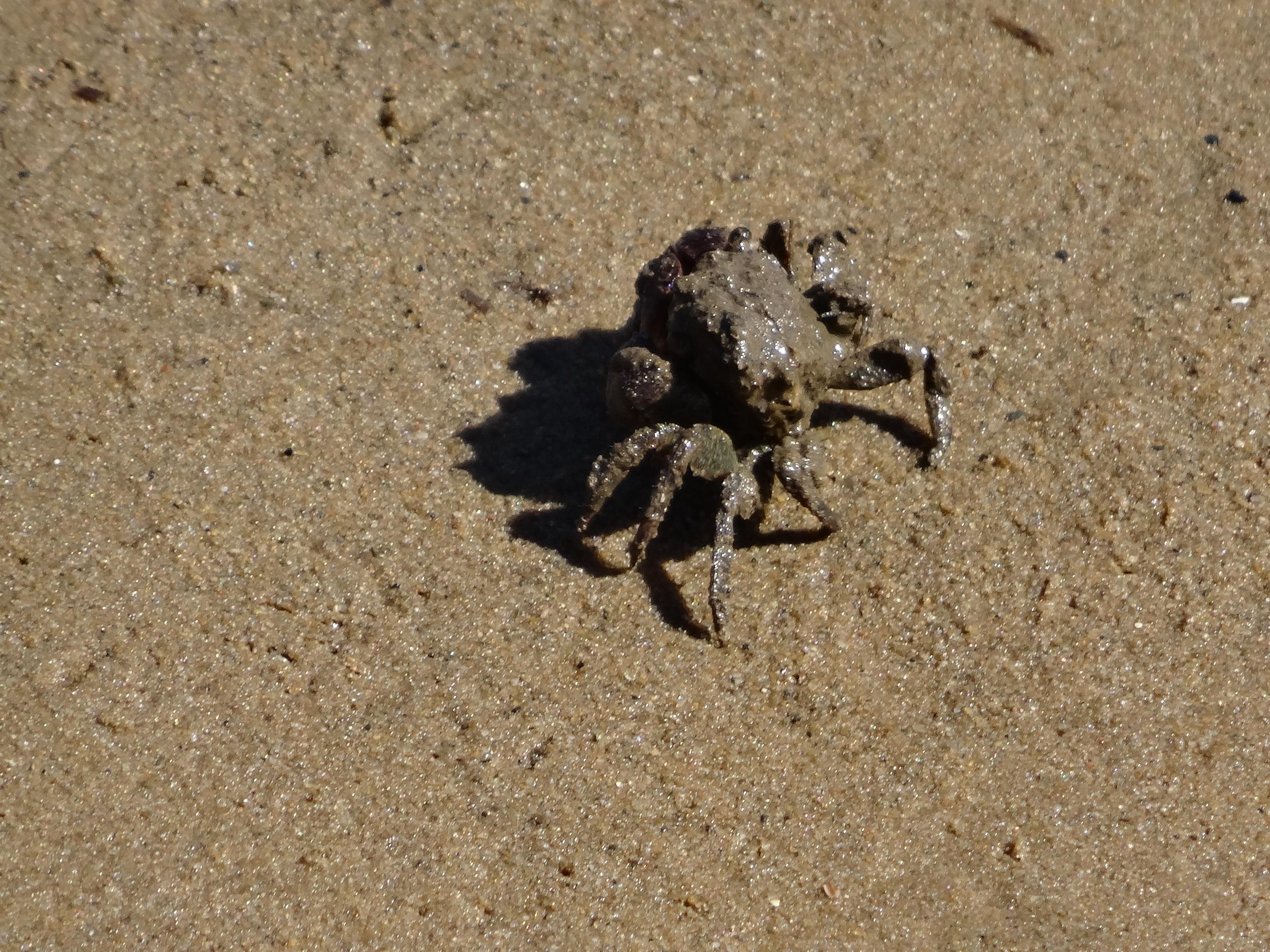 Krabbetjes in Stilbaai