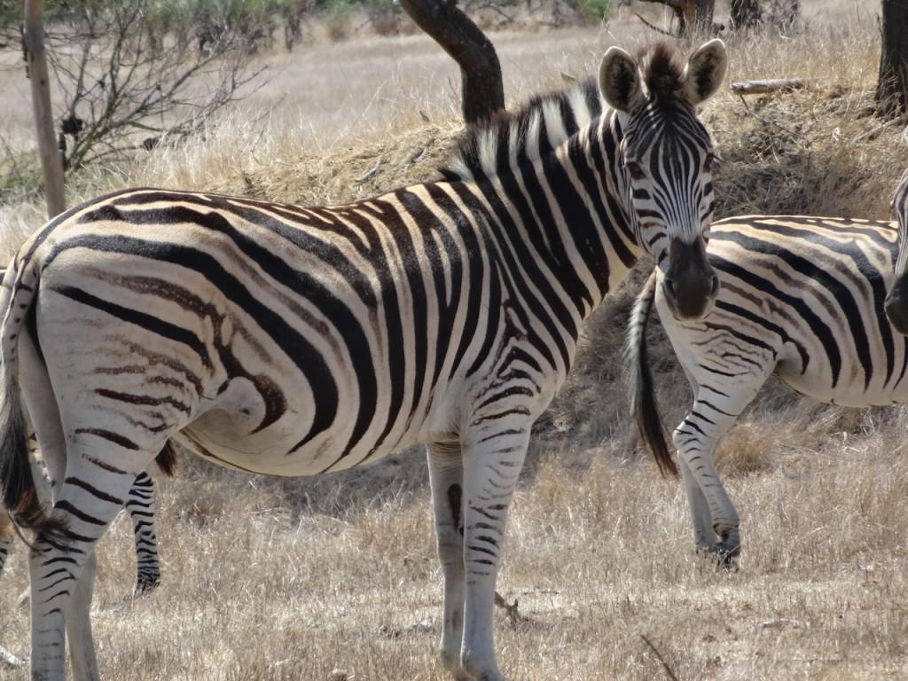 Villiera, Stellenbosch, Zuid-Afrika
