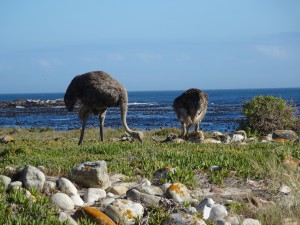 Kaap de Goede Hoop, Zuid Afrika