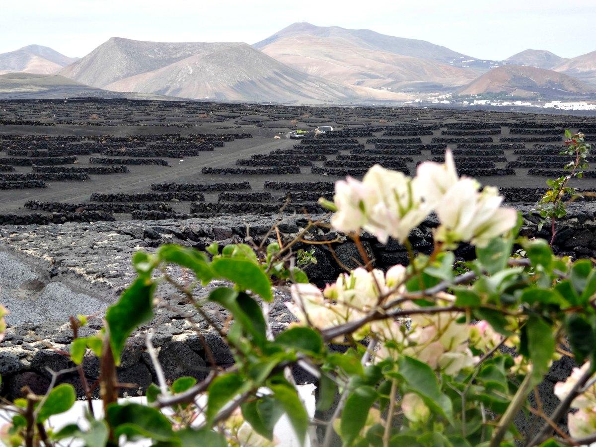 wijngaarden en vulkaan